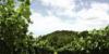 VALSANGIACOMO-034-100x50